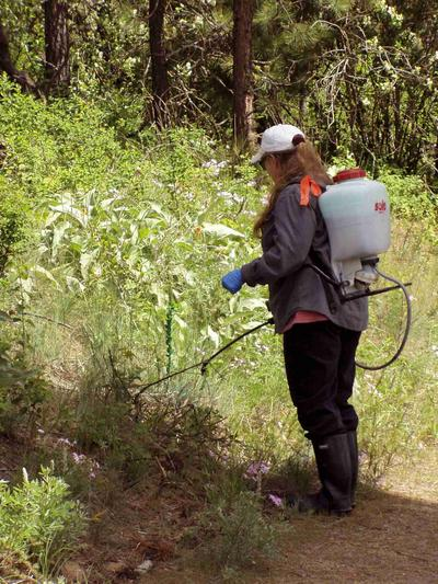 Woman with a sprayer backpack on walking in woods